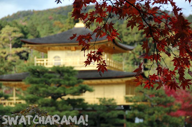 Autumn at the Kinkakuji (Golden Pavillion), Kyoto.